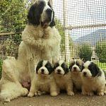 Altoaragon Yvonne e i suoi piccoli di 30 giorni