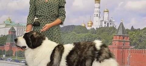 Altoaragon Dalida – World Dog Show 2016 – Mosca