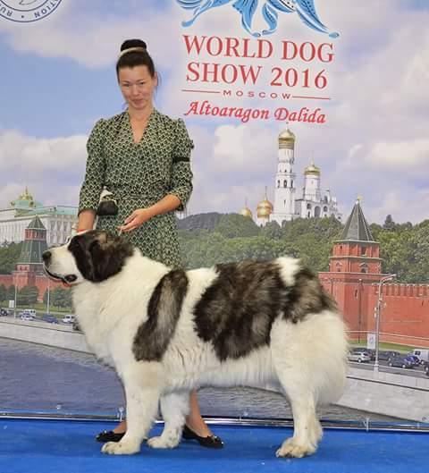 Altoaragon Dalida - World Dog Show 2016 - Mosca